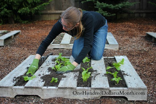 How to Create a Wood Pallet Garden