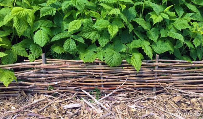 DIY Raspberry Cane Garden Edging