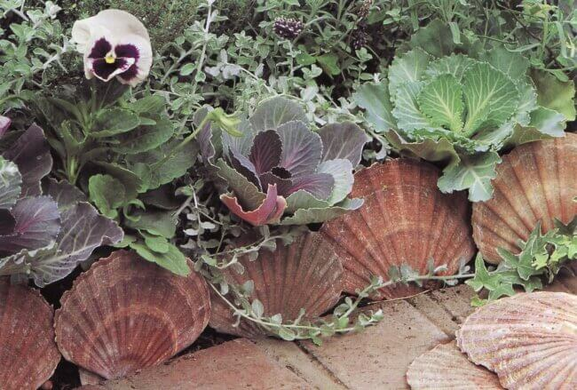 Scallop shell edging – quite lovely