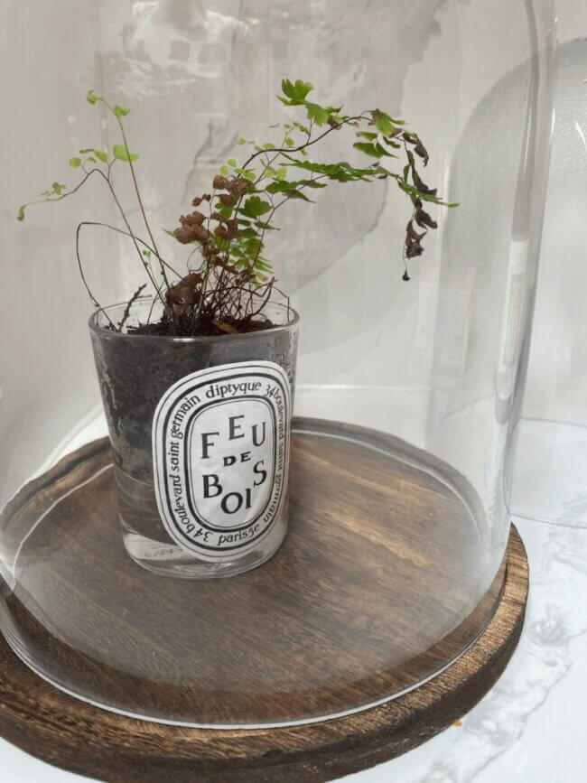 6th July: Reused candle jar self watering pot