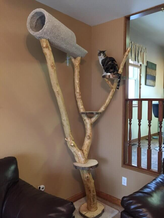 Outdoor Branch Jump and Scratch Tree