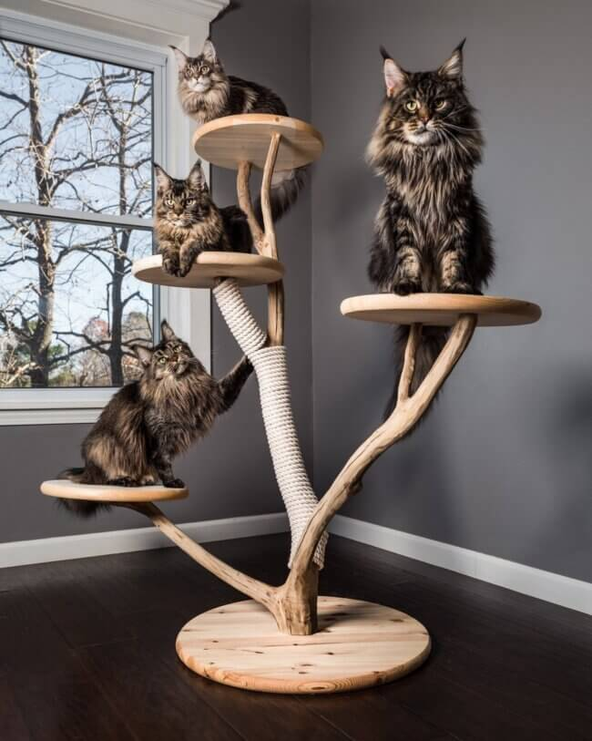 "The ""Sophistikitty"" Cat Tree!"