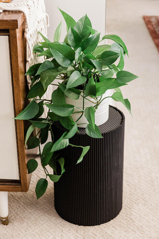 Turn A Trash Can Into A Plant Stand