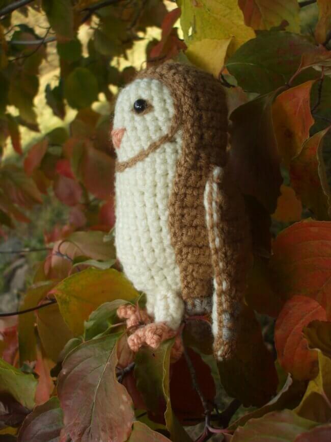 Soren the Barn Owl