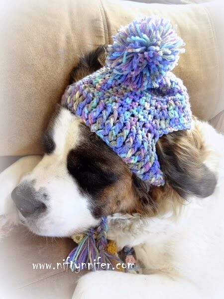 A Silly Hat For My Silly Dog