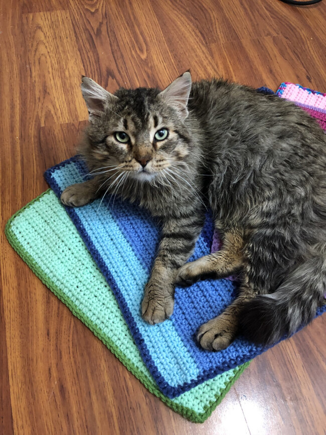 Animal Shelter Kitty Blanket