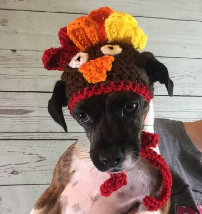 Cat – Small Dog Turkey Hat