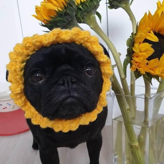 Crochet flower dog hat