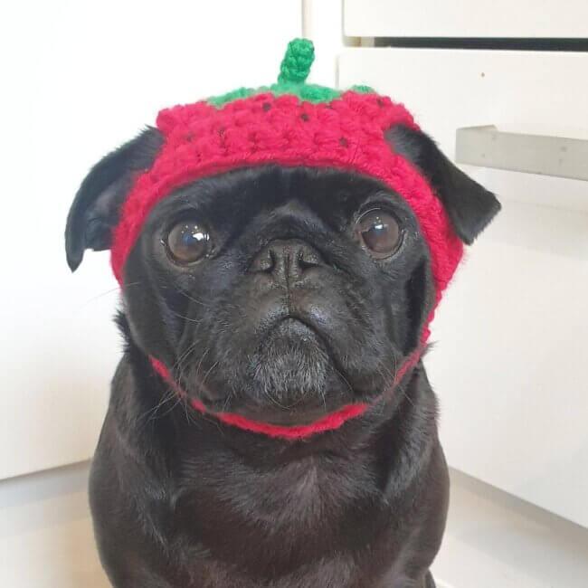 Crochet strawberry dog hat