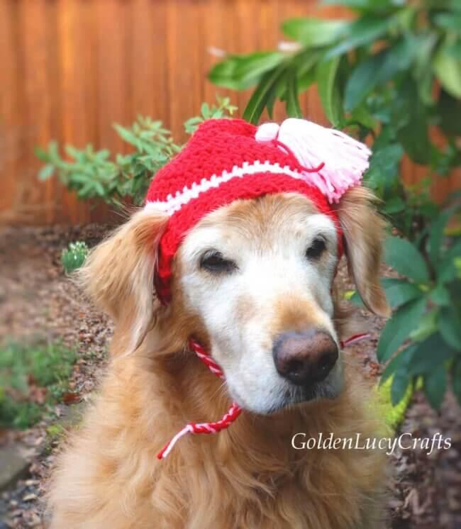Dog Hat Crochet Pattern
