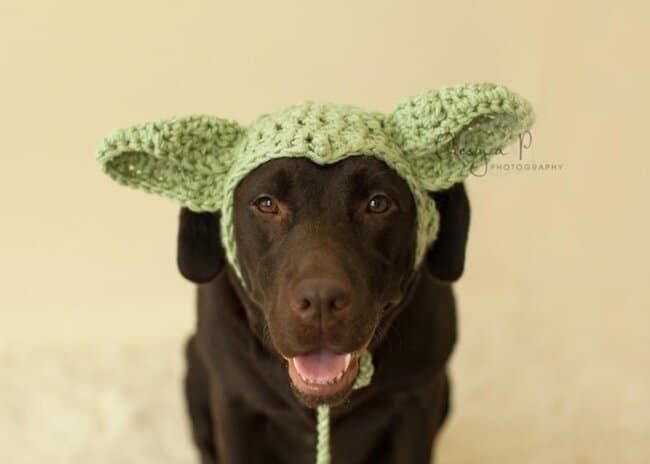 Large dog hat, Dog Alien Child Hat, Halloween hat for dogs