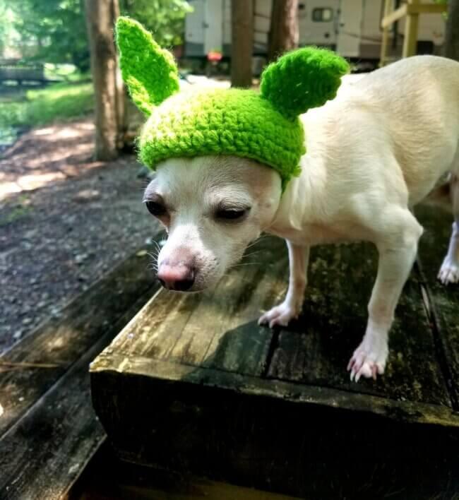 Little Baby Yoda Pet Hat