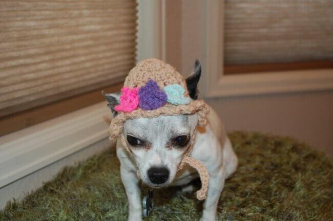 Spring Flowers Dog Hat
