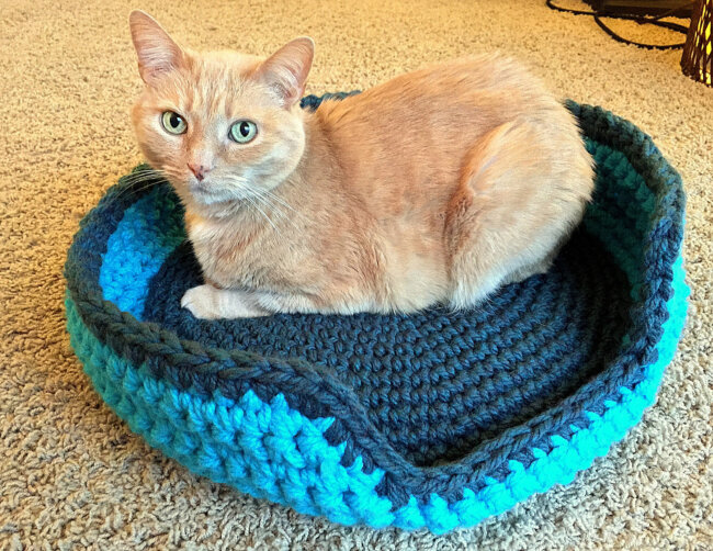 Sturdy & Comfy Cat Bed