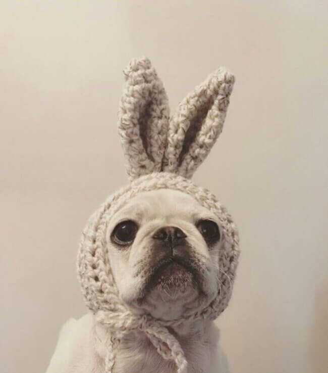 The Bunny ears dog. Fun hat, bonnet for your puppy.