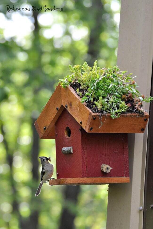 DIY Living Roof Birdhouse, Succulent Birdhouse