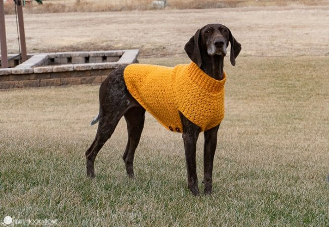 Easy Crochet Dog Sweater for Large and Extra Large Dogs