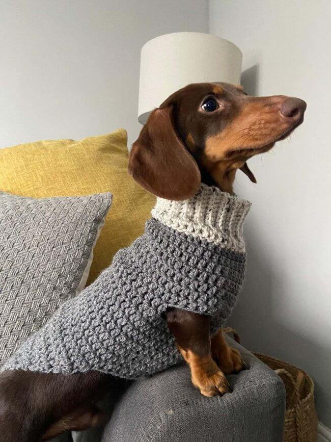 Easy small dog, sausage dog, dachshund crochet jumper, sweater pattern