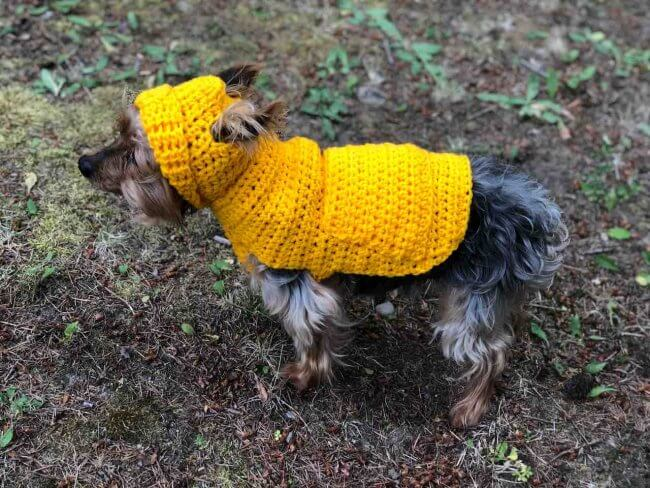 Jack's Small Dog Hoodie Sweater