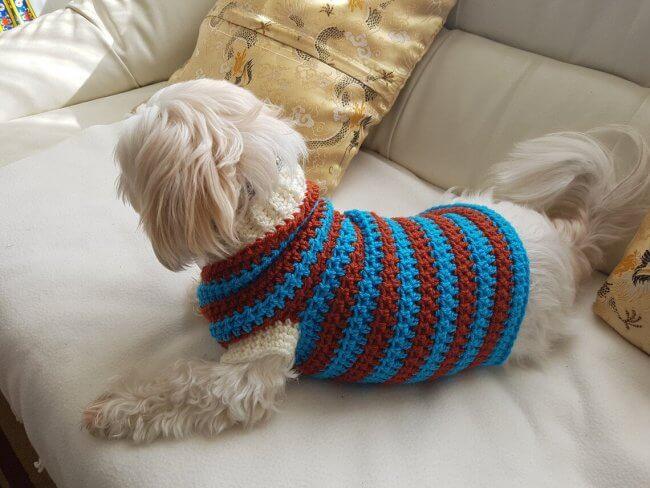 Lou Lou Sporty Dog Sweater Pattern