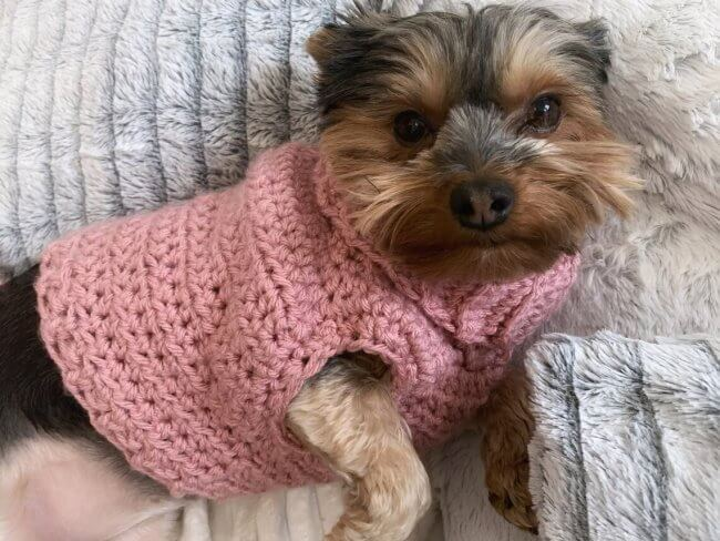 Minnie's Turtleneck Dog Sweater- Small Dog / Puppy Clothes